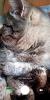 MIUI v6 PATH v1.6 - Image 3