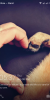 Infinix Note 2 LTE Chameleon XOS V 2.0 Update - Image 1