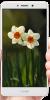 Huawei Honor 6X - Image 3